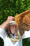 Experienced senior beekeeper making inspection in apiary. In springtime royalty free stock image