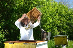 Experienced senior beekeeper making inspection in apiary Stock Photo