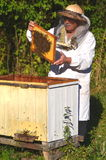 Experienced senior beekeeper making inspection in apiary. After summer season royalty free stock image