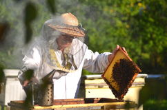 Experienced senior beekeeper making inspection in apiary Royalty Free Stock Photos