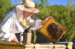 Experienced senior beekeeper making inspection in apiary. After summer season royalty free stock photography