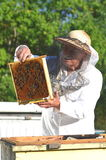 Experienced senior beekeeper making inspection in apiary. After summer season royalty free stock images