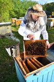 Experienced senior beekeeper making inspection in apiary. After summer season royalty free stock photos
