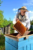 Experienced senior beekeeper making inspection in apiary. After summer season stock photography