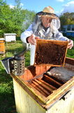 Experienced senior beekeeper making inspection in apiary. After summer season stock photo