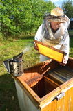 Experienced senior beekeeper making inspection in apiary. After summer season stock image
