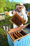 Experienced senior beekeeper making inspection in apiary. After summer season stock images