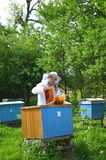 Experienced senior beekeeper putting empty honeycomb frames into a beehive in his apiary Stock Photo