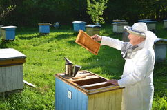 Experienced senior beekeeper working in his apiary. In the springtime royalty free stock photo