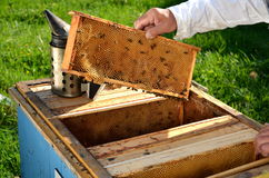 Experienced senior beekeeper working in his apiary. In the springtime royalty free stock photography