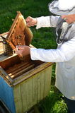 Experienced senior beekeeper working in his apiary. In the springtime stock photography