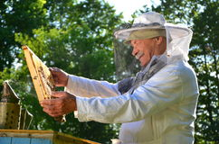 Experienced senior beekeeper working in his apiary. In the springtime stock image