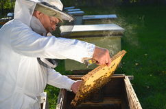 Experienced senior beekeeper working in his apiary. In the springtime stock photos