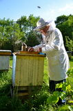 Experienced Senior Beekeeper Working In His Apiary Royalty Free Stock Images