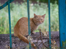 Experienced stray red cat behind bars fence Stock Photo