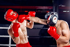 Experienced two boxers are fighting with each other Royalty Free Stock Photo