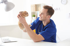 Experienced young vet examining health of animal. Cheerful male veterinarian is analyzing state of the rabbit. He is sitting at desk and holding a pet. Man is Stock Photos