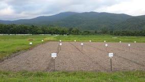 Experiment field Stock Photo