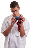 Experiment with grapes fruits in laboratory Royalty Free Stock Image
