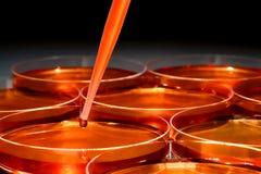 Experiment in het Laboratorium van het Onderzoek van de Wetenschap stock afbeelding