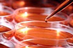 Experiment im Wissenschafts-Forschungs-Labor lizenzfreies stockfoto
