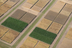 Experimental field. Bird's-eye view Royalty Free Stock Image
