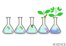 Experimental growth of plants in Erlenmayer flask,plant,nature,environment Royalty Free Stock Image