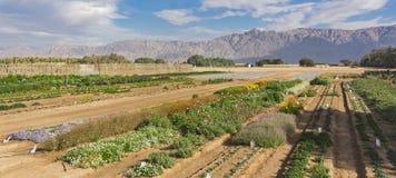 Experimenteel Landbouwbedrijf in de Arava-Woestijn in Zuidelijk Israël royalty-vrije stock foto