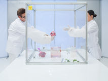 Experimenting with biological matter in sterile chamber Royalty Free Stock Photo