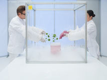 Experimenting with biological matter in sterile chamber Royalty Free Stock Image