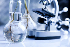 Experimenting with flora in laboratory royalty free stock images