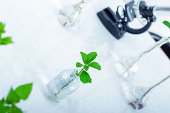 Experimenting with flora in laboratory. Green plants and scientific equipment in biology laborotary Royalty Free Stock Photo