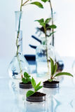 Experimenting with flora in laboratory. Royalty Free Stock Image