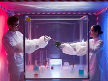 Experimenting with vegetable in protective enclosure. Two scientists, a men and a woman, conducting chemical experiments on a piece of vegetable in a protective Royalty Free Stock Photo