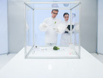 Experimenting on vegetables in the lab. Two scientists in a lab, a men and a woman, studying a vegetable in a sterile chamber Royalty Free Stock Images