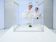 Experimenting on vegetables in the lab. Two scientists in a lab, a men and a woman, studying a vegetable in a sterile chamber Royalty Free Stock Image