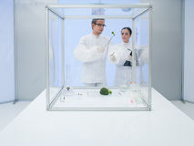 Experimenting on vegetables in the lab. Two scientists in a lab, a men and a woman, studying a vegetable in a sterile chamber Stock Photography