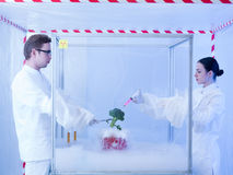Experimenting on vegetables with liquid nitrogen. Two scientists in a containment tent, a men and a woman, experimenting with liquid nitrogen and a piece of Stock Image