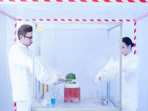 Experimenting with vegtables in the sterile chamber Royalty Free Stock Photo