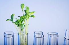 Experimento con la planta de semillero verde Fotos de archivo libres de regalías