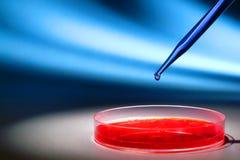 Experimento de la biotecnología en laboratorio de investigación de la ciencia imagen de archivo