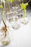 Experimento del laboratorio de la ecología Imagen de archivo