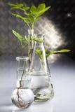Experimento del laboratorio de la ecología Foto de archivo libre de regalías