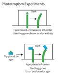Experimentos que demuestran fototropismo en plantas Imagen de archivo