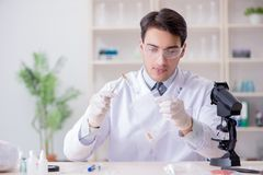 The expert criminologist working in the lab for evidence. Expert criminologist working in the lab for evidence stock photos