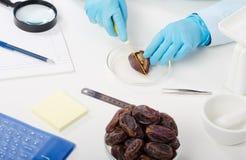 Expert hands cutting an date in half Stock Photo