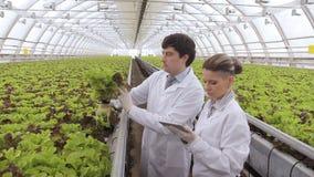 Experten überprüfen den Salat in der Hydroponik in einem Gewächshaus stock footage
