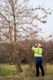 Experto durante el examen de los árboles para una infestación posible del parásito por el escarabajo longhorned asiático foto de archivo libre de regalías