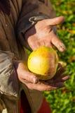 Experts et pomme Photos libres de droits
