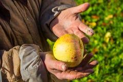 Experts et pomme Photographie stock libre de droits